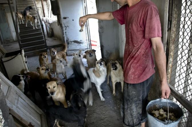 Շների դրախտը. Երևանում ոչնչացնում են անտուն շներին, մինչդեռ դրանց փրկելն ավելի արդյունավետ է