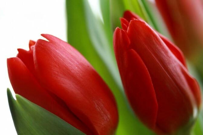 «Հայ կինն ամենալավն է, որովհետև ամենադիմացկուն է». Կին քաղաքական գործիչներն ու մարտի 8-ը