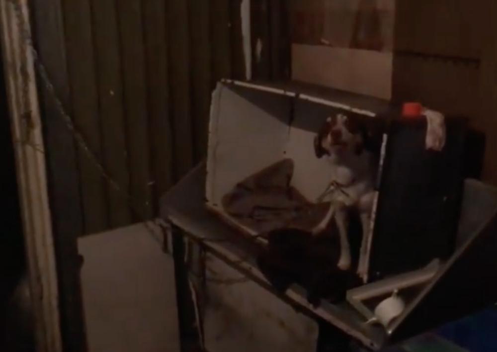 Ծանր ճակատագրի տեր երիտասարդ աղջիկը  տասնյակ թառող շներ պահում իր տնակում. Տեսանյութ