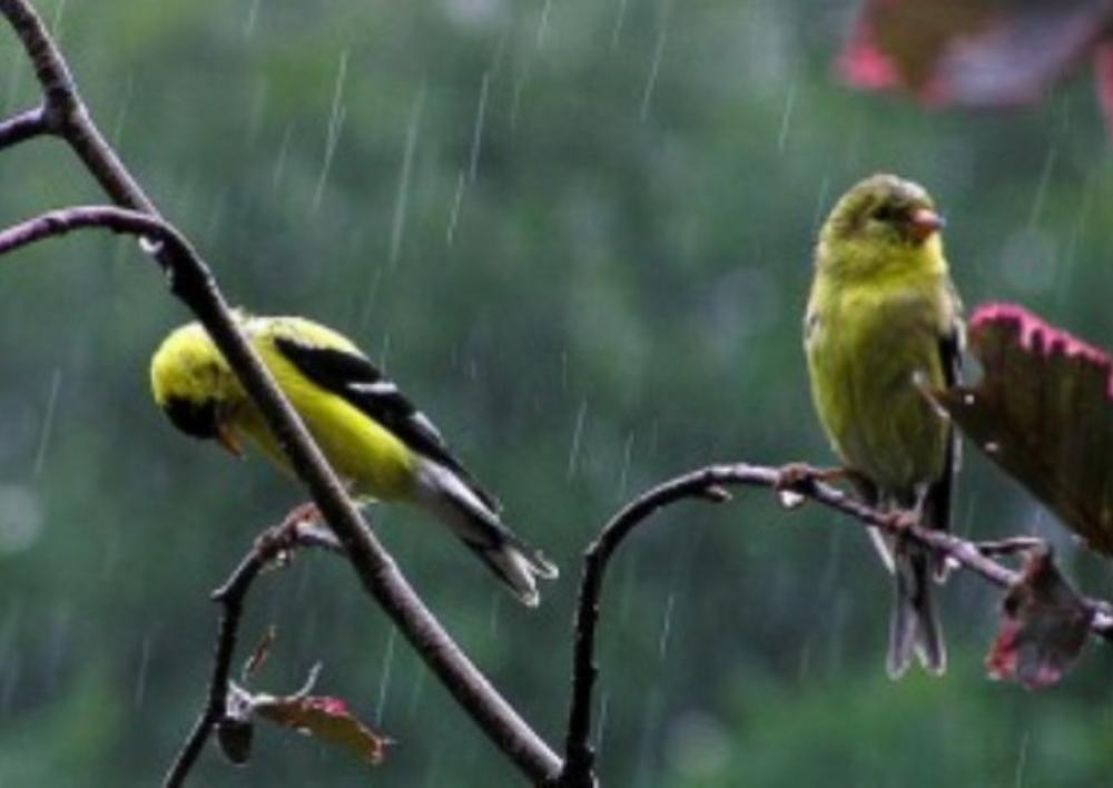 Հուլիսի 6-9-ը շրջանների զգալի մասում սպասվում են կարճատև անձրև և ամպրոպ