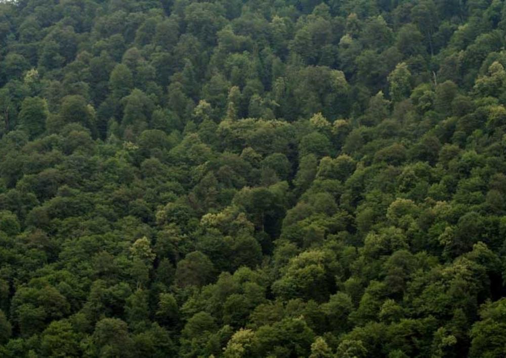 «Ապօրինի անտառահատումները դատապարտելի են, եւ որեւէ հանգամանք չի կարող դա արդարացնել». հայտարարություն