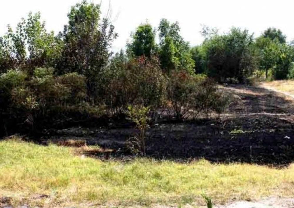 Հրդեհ Ծիծեռնակաբերդի զբոսայգում․ Այրվել է մոտ 2 հա բուսածածկույթ և 100 ծառ