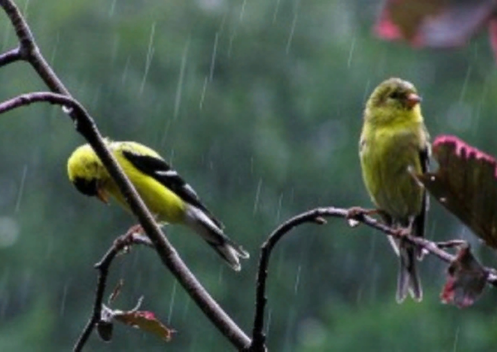 Սպասվում է անձրև և ամպրոպ, ջերմաստիճանը կնվազի
