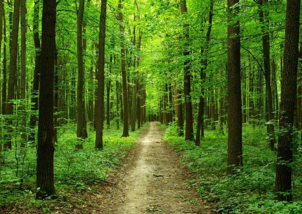 Կառավարությունը 424 մլն կտրամադրի մոտ 150 հա անտառ վերականգնելու համար