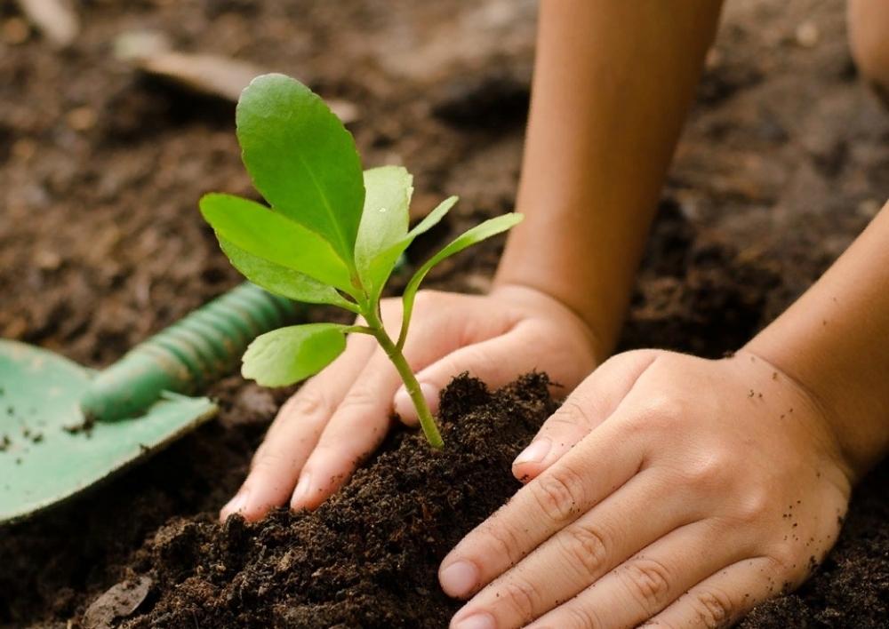 Անտառվերականգնման և անտառապատման աշխատանքների կատարման համար անհրաժեշտ են շուրջ 1000 սեզոնային աշխատողներ