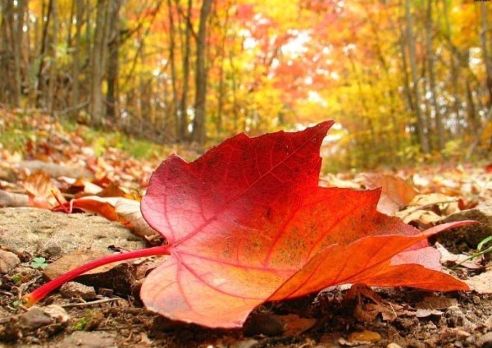 Նոյեմբերի 25-28-ին ջերմաստիճանը կտրուկ կտաքանա. Գագիկ Սուրենյան