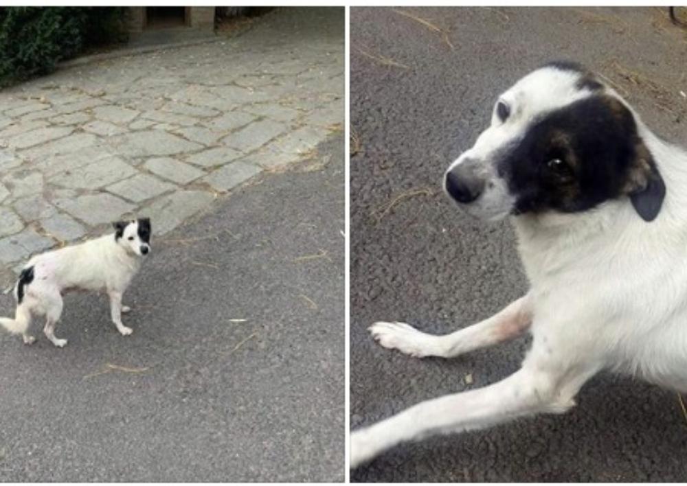 Դիլիջանում կրակել են շան վրա. կատարվում է հետաքննություն. Ոստիկանություն